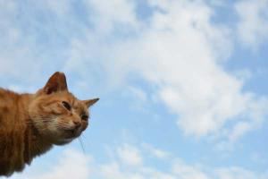 Ai-chan The Cat - Blue Sky and Clouds