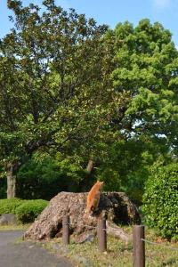 Brother Cat Getting On Tree Stump