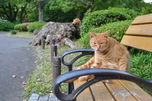 Ai-chan The Cat Looking At Camera