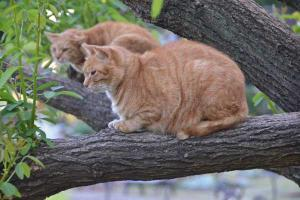 Cat Brothers Up in a Tree