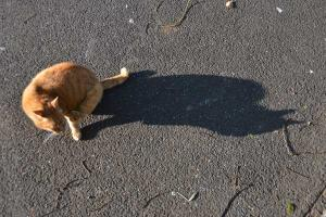 Ai-chan The Cat & Shadow
