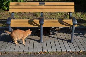 Ai-chan The Cat & Friend