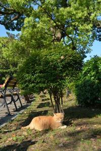 A Friend of Ai-chan The Cat