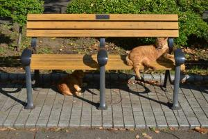 Ai-chan The Cat (under the bench) and Brother