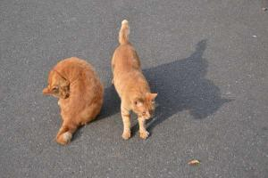 Ai-chan The Cat & Brother - Good Morning!