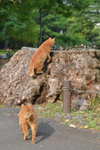 Ai-chan The Cat Walking Up To Tree Stump
