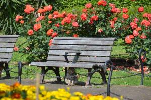 Cat under Rose Garden Bench