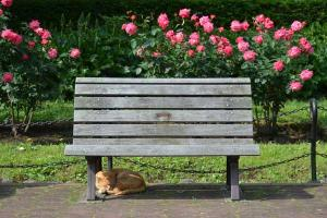 Cat, Bench & Roses