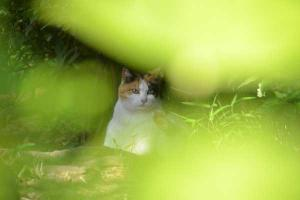 Sakura-chan The Cat through Fresh Green Leaves