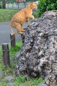Ai-chan's The Cat Getting on a Tree Stump