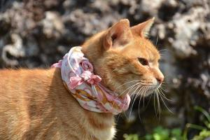 Ai-chan The Cat Wearing Scarf
