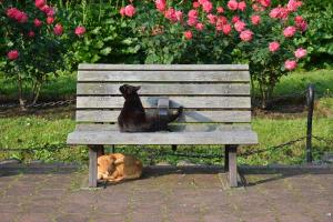 Bench Cats & Roses
