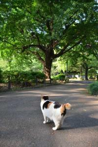 Sakura-chan The Cat & Ginkgo Tree