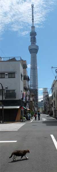 Cat & Tokyo Sky Tree