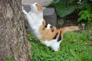 Cat Scratching a Tree