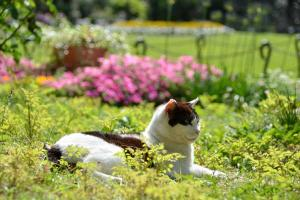 Cat & Sunshine Flowers