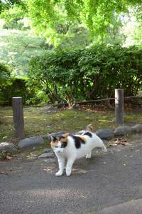 Sakura-chan The Cat - Good Morning!
