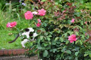 Cat Tail & Roses