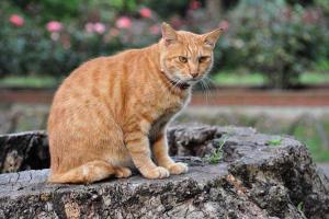 Cat Sitting On a Tree Stump