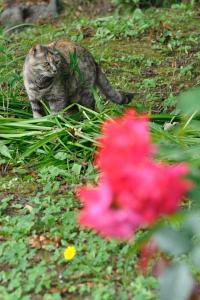 Cat & Red Roses