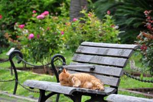 Ai-chan The Cat on a Bench