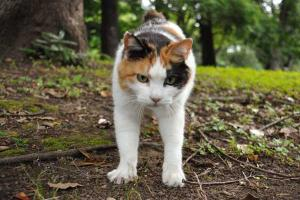 Sakura-chan The Cat - Good Morning!