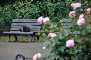 Black Cat on Wet Bench