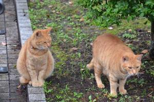 Ai-chan The Cat & Brother Face-Off Neighbor