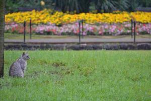 Cat & Marigold Flowers