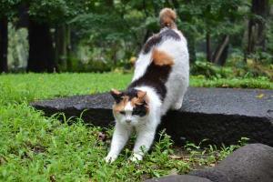 Sakura-chan The Cat Exercising
