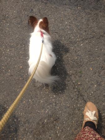 散歩もするよ!