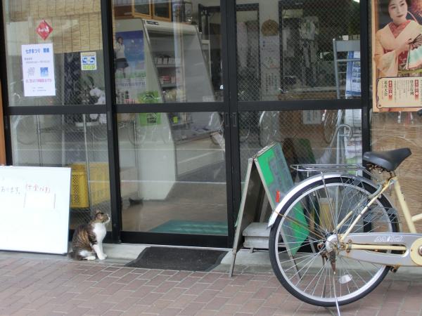 下本町の豆腐屋さんの店前にいた!