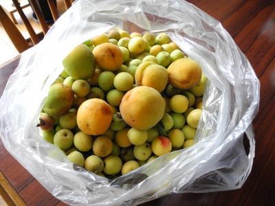 20130711梅3キロ&杏