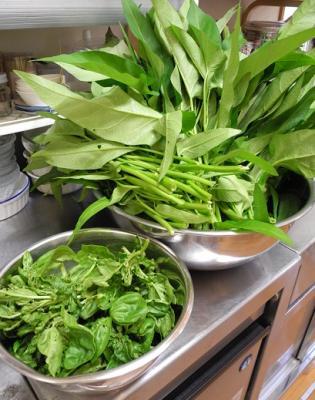 20130817自家栽培空芯菜とバジル