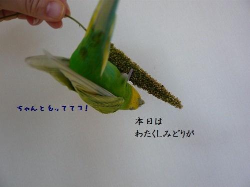 s-P1210407.jpg