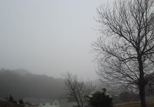fog4203.jpg