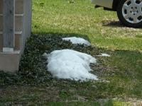 ようやく雪がなくなってきました。