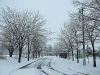 中学校の木々も真っ白