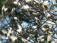 白い咲がたくさん!