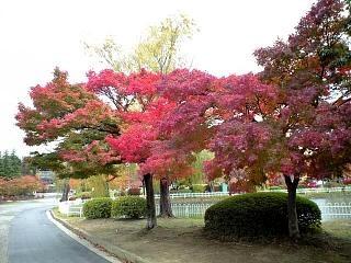 20121111福島の紅葉(その2)