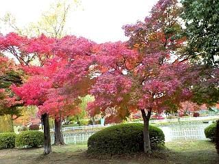 20121111福島の紅葉(その3)
