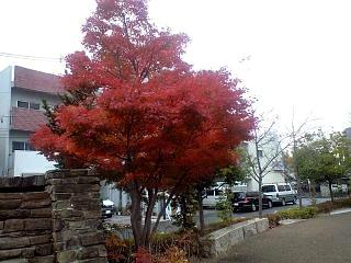 20121117紅葉(その1)