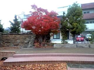 20121117紅葉(その2)