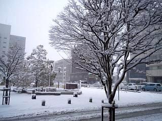 20130114雪景色(その5)