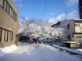 20130115雪景色(その2)