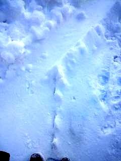 20130115雪景色(その3)