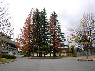 20121111福島の紅葉(その4)