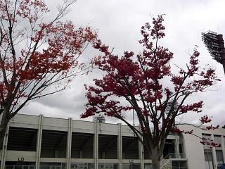 20121111福島の紅葉(その5)