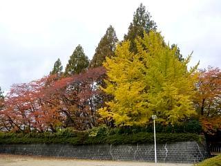 20121111福島の紅葉(その7)
