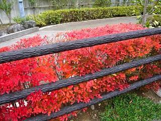 20121111福島の紅葉(その23)